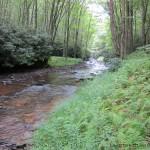 Laurel Fork 3_1100