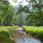 Laurel Fork_1300